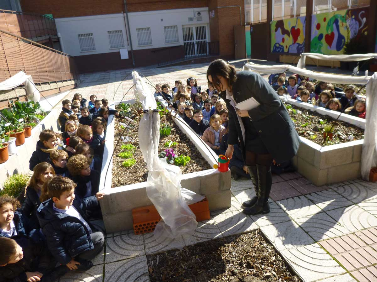 Colegio Agustinas (Valladolid), Proyecto Miralrededor